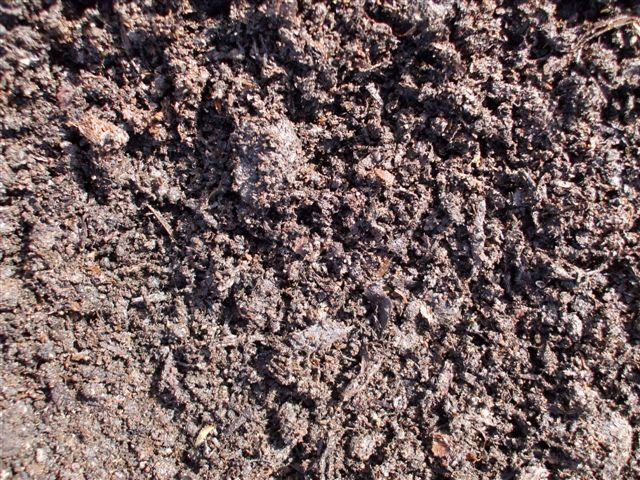 Xcv84u canterbury new zealand for Mushroom soil